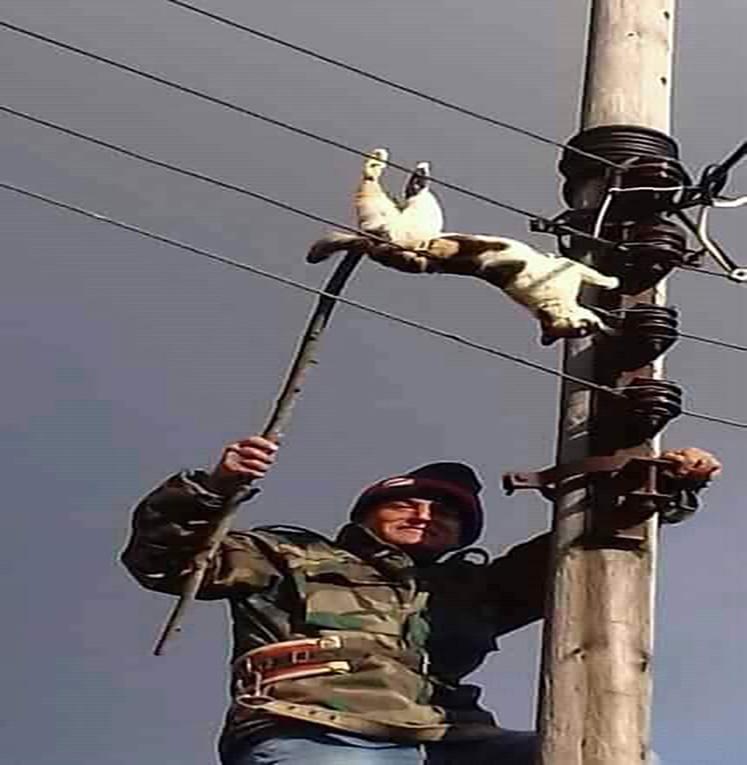 قط يزيد الطين بلة ويتسبب بزيادة التقنين الكهربائي في طرطوس
