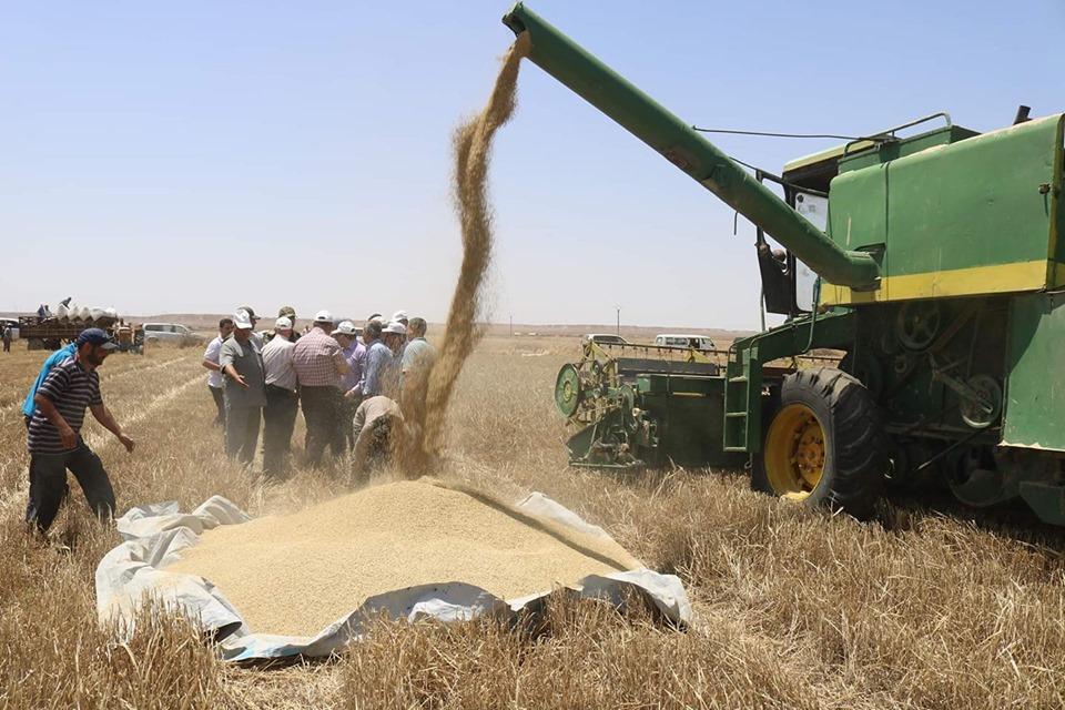 النظام يمنع أهالي دير الزور ببيع القمح لغيره