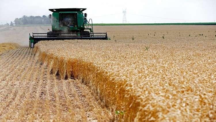 صحيفة الشرق الأوسط : النظام السوري يخيب آمال مزارعي القمح في مناطقه
