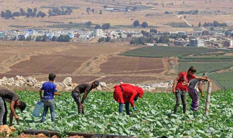 النظام يصادر أراض زراعية لنازحين في حماة وإدلب