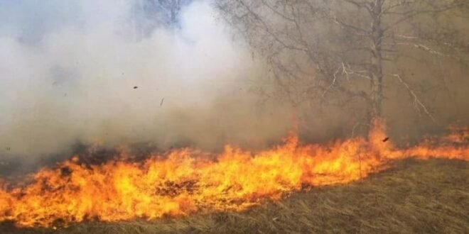 More than 55 fires in As-Suwayda Governorate in one week
