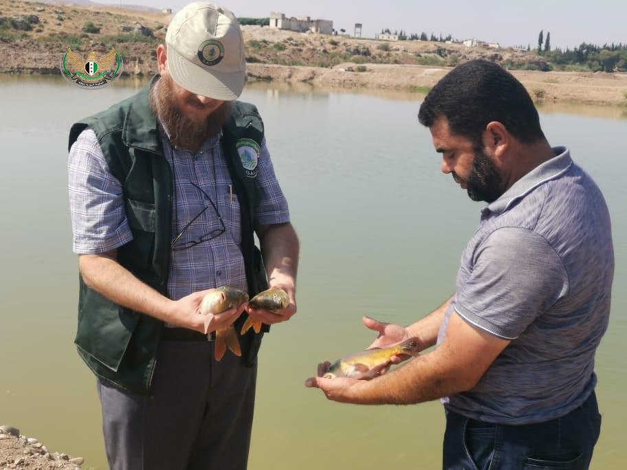 مدير الزراعة في الحكومة المؤقتة يجري جولة على احواض الأسماك بريف حلب