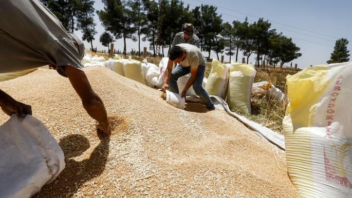 حكومة النظام تغري الفلاحين بأسعار مجزية  للقمح خلال العام القادم