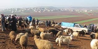 رغم ارتفاع أسعار اللحوم ...النظام يسمح بتصدير الأغنام والماعز السورية